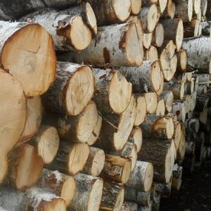 Продам лес круглый береза
